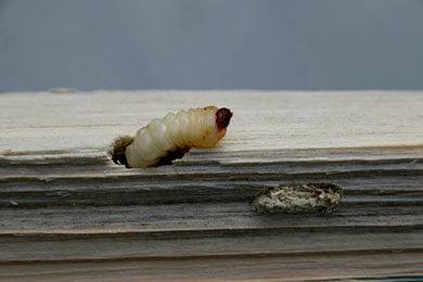 Houtworm bestrijding Noord Holland