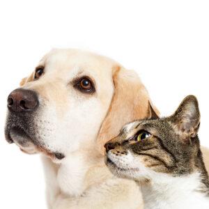 Katten & Honden