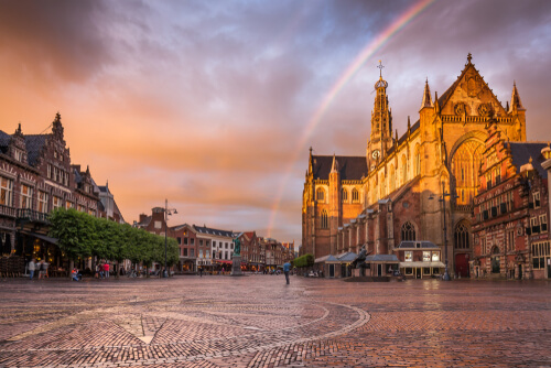 Ongediertebestrijding Haarlem